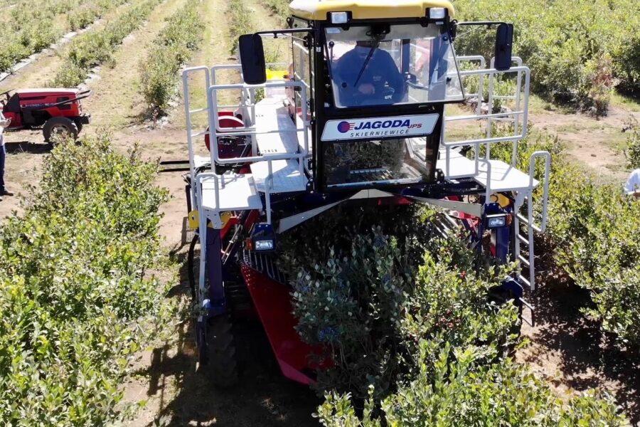 Blueberry Harvester